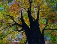 dreamstime_tree_sml